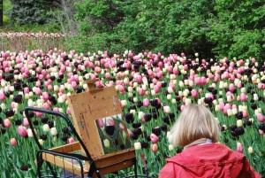 Peintre et tulipes