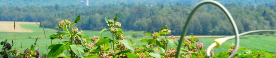 fleur d'ail et ferme