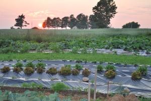 coucher de soleil jardin