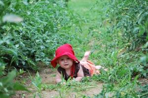 Roukie, terre et tomatière