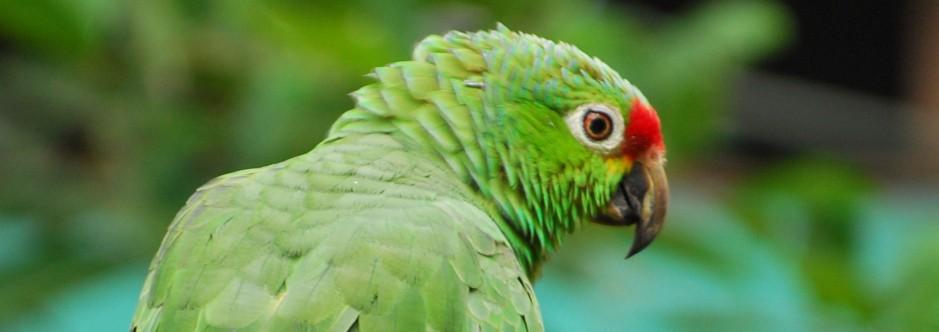 Lora Costa Rica