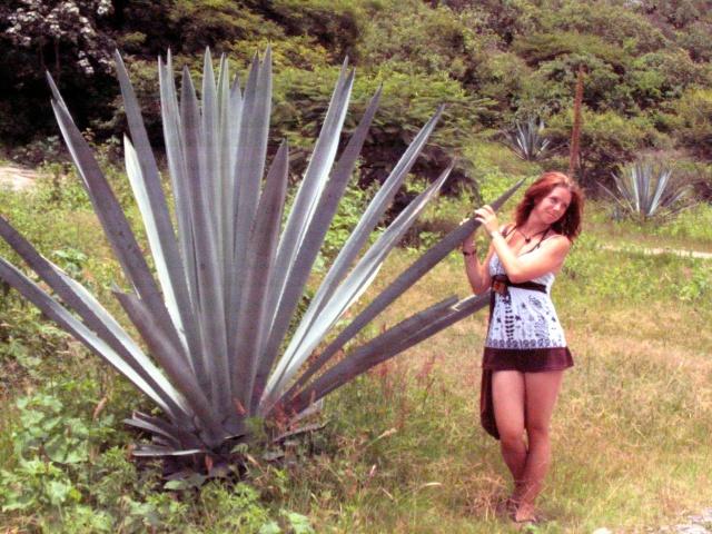 Maguey espadin, Agave de laquelle on tire le jima pour la fabrication de la Mezca, près de Matatlán, Oaxaca.