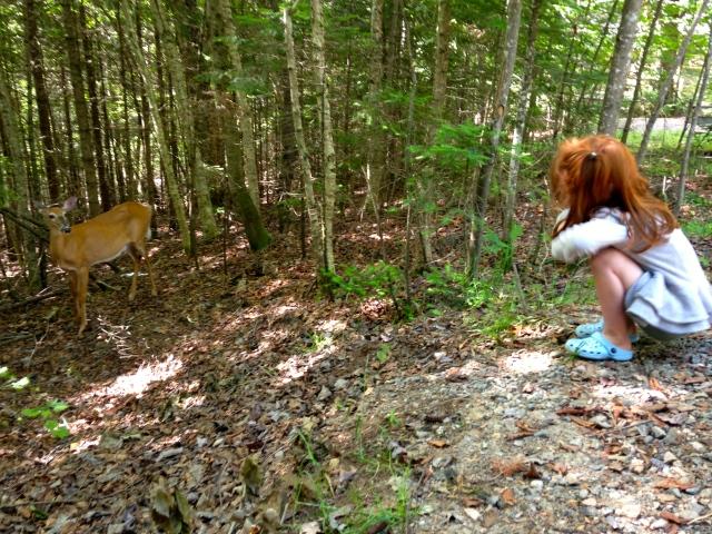 Observation de la faune tout juste à côté de notre tente Huttopia.