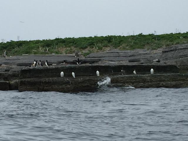 Île aux Perroquets